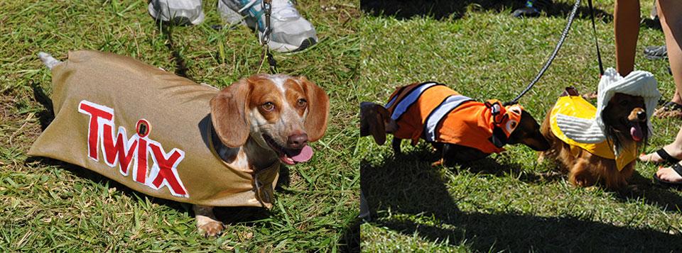 des chiens déguisés pour halloween à Orlando en Floride